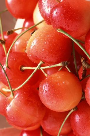 果物・さくらんぼ