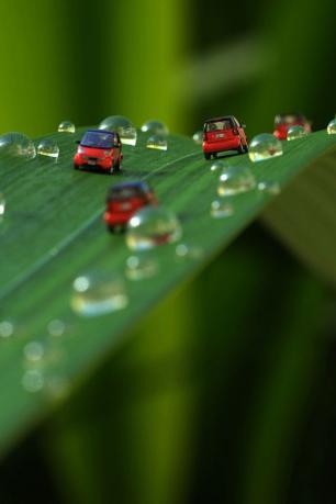 葉・水滴・車