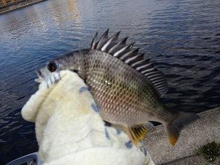 武庫川ぶっこみ釣り 003