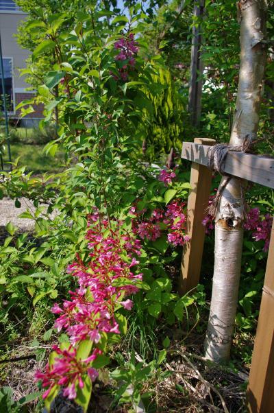 2012-05-21+2012-05-21+001+027_convert_20120522164914.jpg
