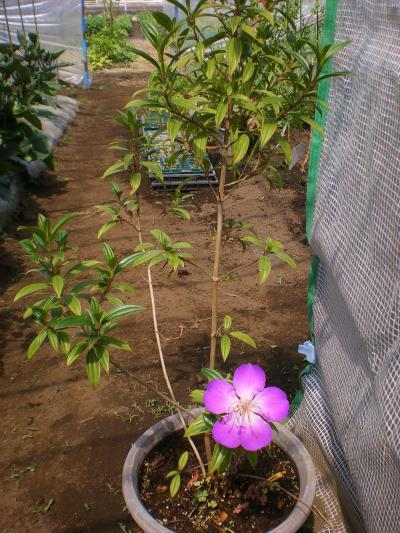 2012-05-24+2012-05-24+004+012_convert_20120524191604.jpg