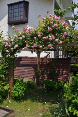2012-05-26+2012-05-26+001+004_convert_20120526193812.jpg