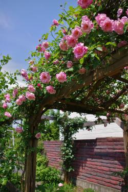 2012-05-26+2012-05-26+001+006_convert_20120526194103.jpg