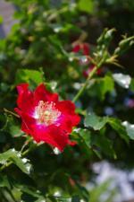 2012-05-26+2012-05-26+001+039_convert_20120526194903.jpg