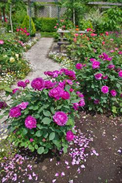 2012-05-31+2012-05-31+001+029_convert_20120531191347.jpg