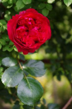 2012-05-31+2012-05-31+001+041_convert_20120531191643.jpg