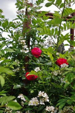 2012-05-31+2012-05-31+001+045_convert_20120531191751.jpg