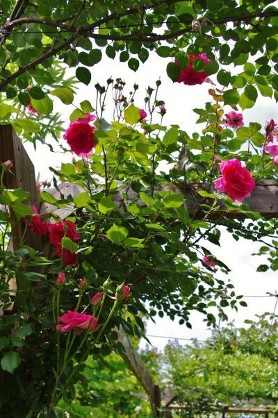 2012-05-31+2012-05-31+001+059_convert_20120602194912.jpg