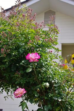 2012-05-31+2012-05-31+001+078_convert_20120531192456.jpg