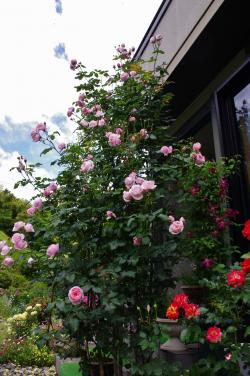 2012-06-10+2012-06-10+001+061_convert_20120610191342.jpg
