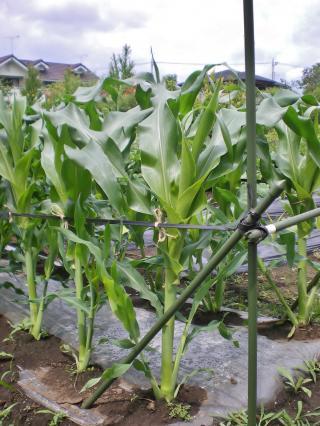 2012-06-11+2012-06-11+001+004_convert_20120611165437.jpg