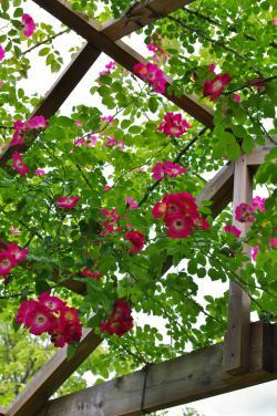 2012-06-13+2012-06-13+001+054_convert_20120613171617.jpg
