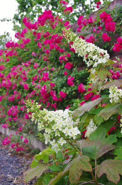 2012-06-13+2012-06-13+001+078_convert_20120613172322.jpg
