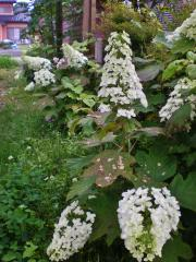 2012-06-19+2012-06-19+003+007_convert_20120619153340.jpg