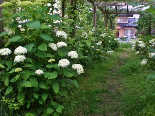 2012-06-19+2012-06-19+003+010_convert_20120619153404.jpg