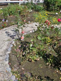 2012-06-20+2012-06-20+003+025_convert_20120620181310.jpg
