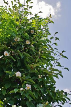 2012-06-26+2012-06-26+001+014_convert_20120626185735.jpg