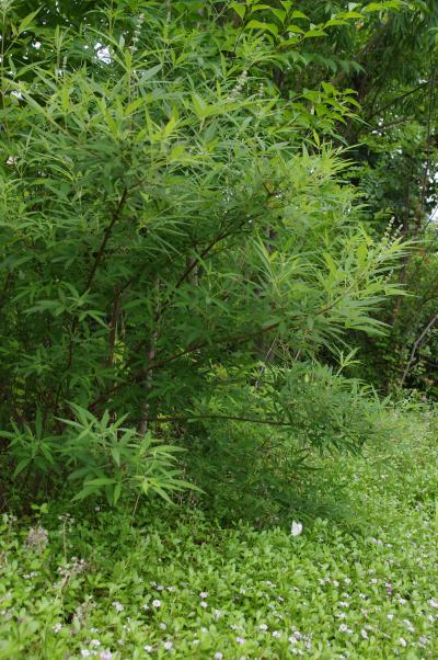 2012-07-15+2012-07-15+001+047_convert_20120715175628.jpg