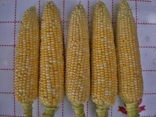 2012-07-16+2012-07-16+001+022_convert_20120716164356.jpg