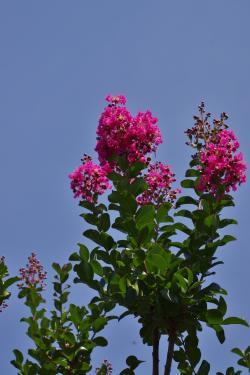 2012-07-17+2012-07-17+001+002_convert_20120717172607.jpg