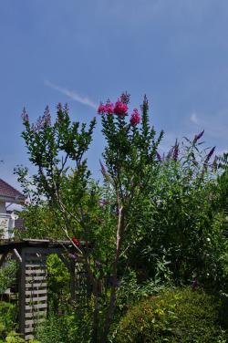 2012-07-17+2012-07-17+001+006_convert_20120717172715.jpg
