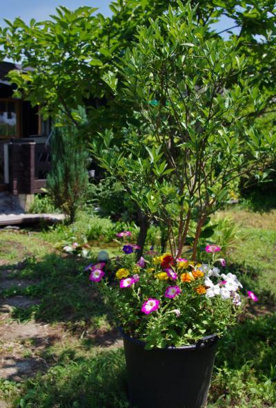 2012-07-17+2012-07-17+001+012_convert_20120717172822.jpg