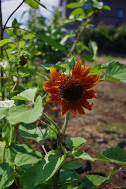 2012-07-19+2012-07-19+001+026_convert_20120719174759.jpg