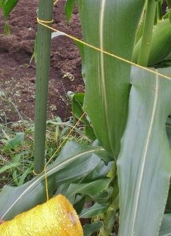 2012-07-21+2012-07-21+001+009_convert_20120721190122.jpg