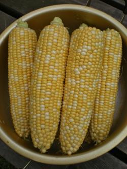 2012-07-21+2012-07-21+001+060_convert_20120721190433.jpg