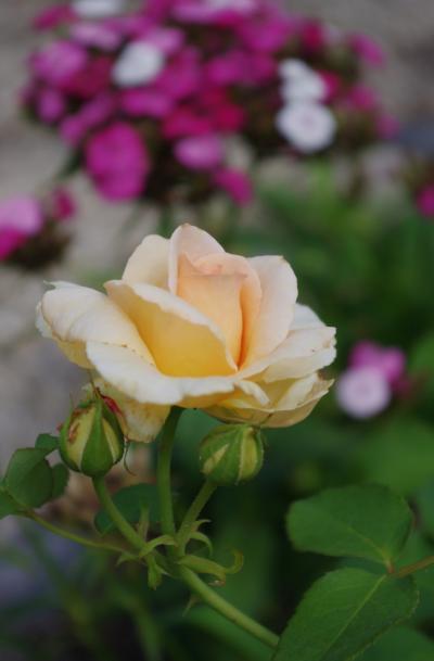 2012-07-23+2012-07-23+001+027_convert_20120723191451.jpg