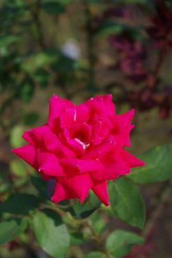 2012-07-23+2012-07-23+001+042_convert_20120723191434.jpg