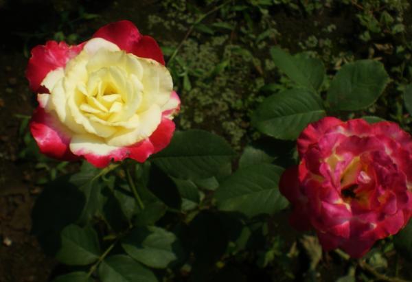 2012-07-27+2012-07-27+001+014_convert_20120727195320.jpg