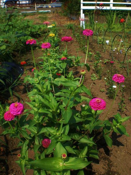 2012-07-27+2012-07-27+001+022_convert_20120727195527.jpg
