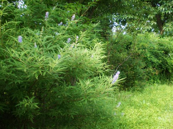 2012-07-29+2012-07-29+001+007_convert_20120729174247.jpg