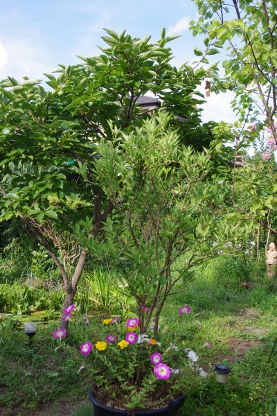 2012-08-04+2012-08-04+004+003_convert_20120804165727.jpg