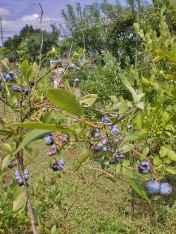 2012-08-09+2012-08-09+001+004_convert_20120809123256.jpg