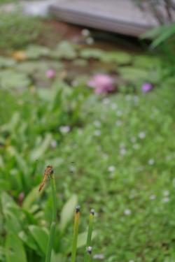 2012-08-10+2012-08-10+001+010_convert_20120810152405.jpg