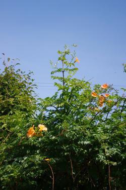 2012-08-16+2012-08-16+001+048_convert_20120816162343.jpg
