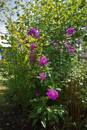 2012-08-16+2012-08-16+001+060_convert_20120819144216.jpg