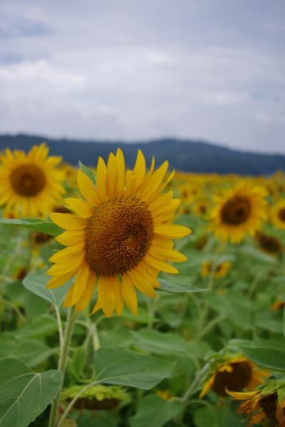 2012-08-18+2012-08-18+001+032_convert_20120818174308.jpg
