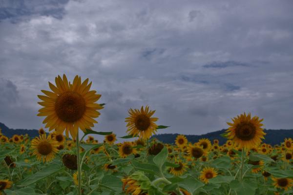 2012-08-18+2012-08-18+001+054_convert_20120818174037.jpg