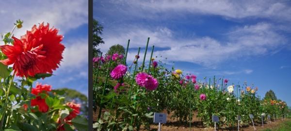 2012-10-13+2012-10-13+001+139-horz_convert_20121014134617.jpg