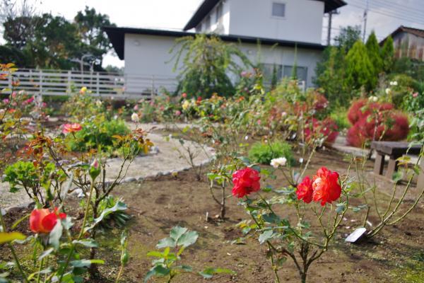 2012-10-22+2012-10-22+004+071_convert_20121022171135.jpg