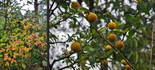 2012-10-23+2012-10-23+001+061-horz_convert_20121023114339.jpg