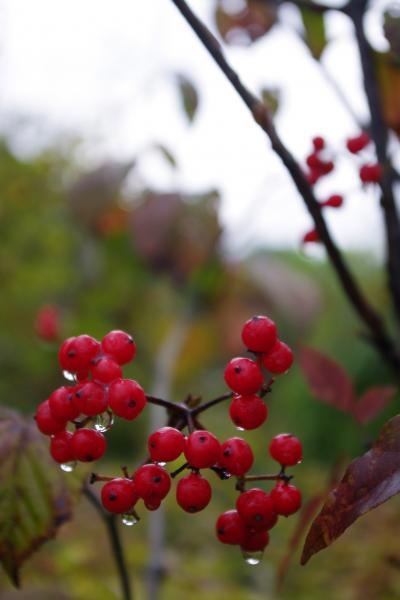 2012-10-23+2012-10-23+001+107_convert_20121023113928.jpg