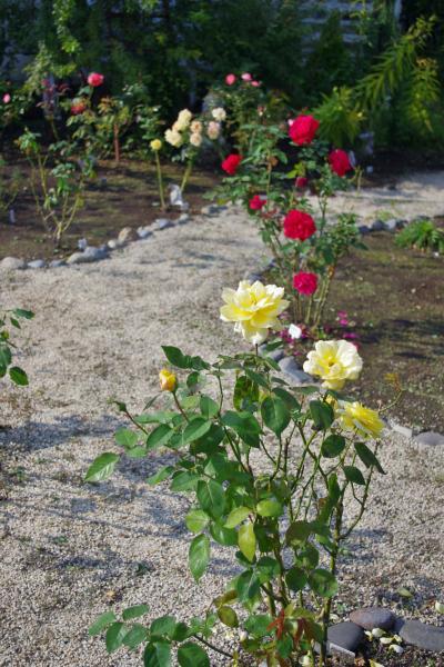 2012-10-26+2012-10-26+003+036_convert_20121026163246.jpg