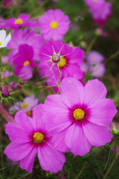 2012-10-27+2012-10-27+001+041_convert_20121027170948.jpg