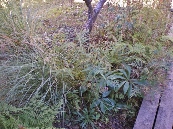 2012-11-21+2012-11-21+005+003_convert_20121121174009.jpg