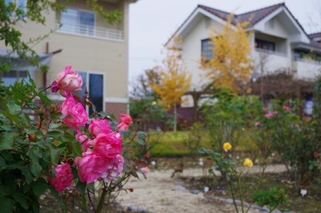 2012-11-23+2012-11-23+001+060_convert_20121124193145.jpg