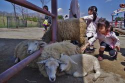 羊_convert_20120505210554